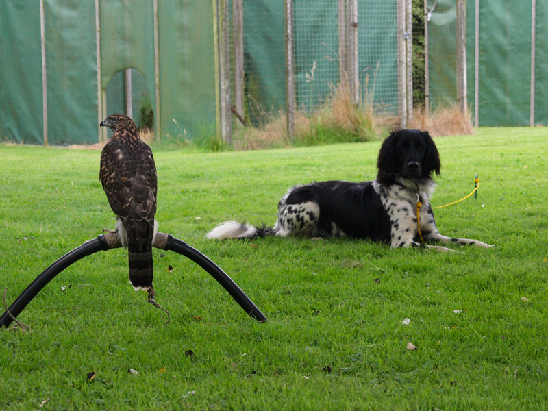 Time together, future falconry partners.